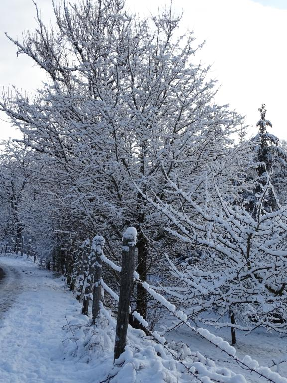 neige janvier 2021
